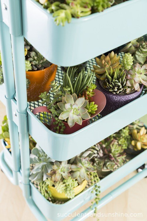 succulents in old drinks cart